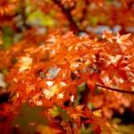 京都哲学の道・永観堂へ紅葉を見に行ってきました!