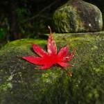 兵庫県加西市にある紅葉の穴場、一乗寺へ行ってきました!