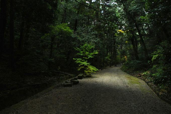 ichizyoji_21