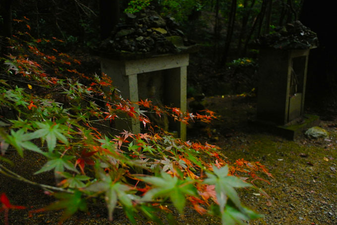 ichizyoji_22