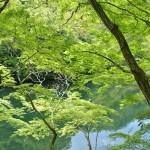神戸ハイキングで初心者におすすめのコース布引の滝~再度山!