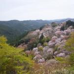 吉野山の桜の所要時間と行き方は?混雑具合とおすすめの回り方をご紹介!