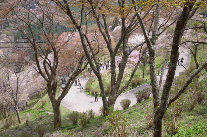 yoshi05