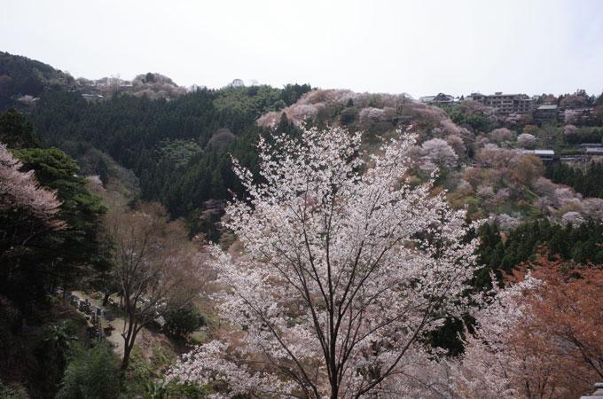 yoshi24