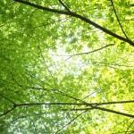 新緑の京都で行きたいおすすめのお寺や神社8選!【名所・穴場編】