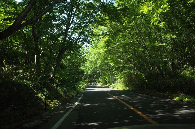 大山環状道路のブナ林のトンネル