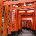 京都日帰り観光におすすめのコースへ行ってきました!