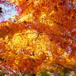 瑞宝寺公園の駐車場や紅葉の見頃は?有馬の秋の絶景へ行ってきた!