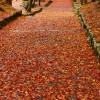 鶏足寺へのアクセスはシャトルバスが便利!見頃紅葉を見に行ってきた!