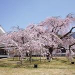 醍醐寺の観光所要時間や見どころは?桜の絶景を見に行って来た!