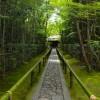 京都大徳寺の高桐院でお抹茶と庭園でリラックス!