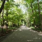下鴨神社へのアクセスは出町柳から徒歩7分!京都最大のパワースポットと癒しの森を求めて!