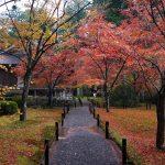京都大原三千院と宝泉院へ紅葉を見に行って来たよ!緑の苔と紅葉の絶景コントラストの世界!