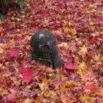 圓光寺へ紅葉とお地蔵さんを見に行ってきた!一乗寺おすすめカフェつばめのランチ情報も!