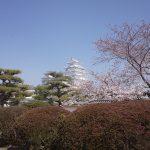 姫路城へ桜の観光に行ってきました!見頃や混雑は?世界遺産でのお花見!