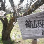 篠山の桜の名所篠山城へ行ってきた!駐車場やアクセス方法は?