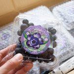福岡県宗像市からふるさと納税で人気のブルーベリーが届きました!無農薬有機肥料でおすすめ!