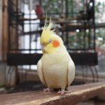 神戸どうぶつ王国のアクセスや所要時間は?鳥や動物とふれあえるおすすめスポット!