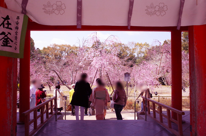 神苑の入り口から見えるしだれ桜