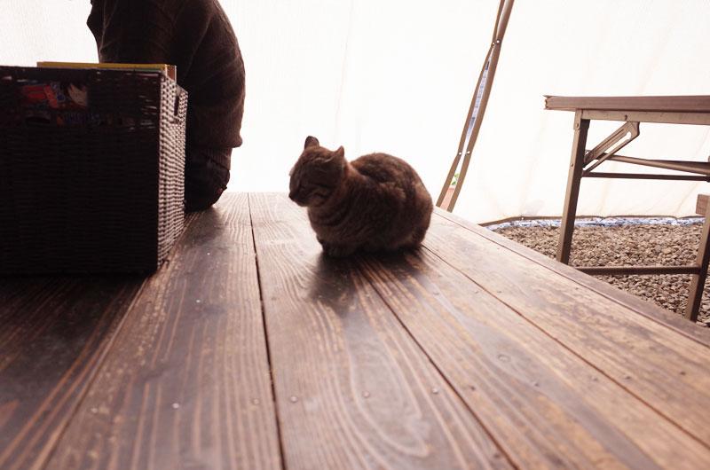 なかむらの看板猫
